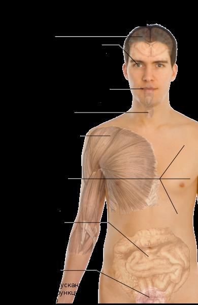 Рассеянный склероз - симптомы